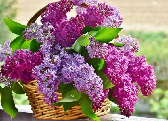 Wicker Basket with Purple Lilacs