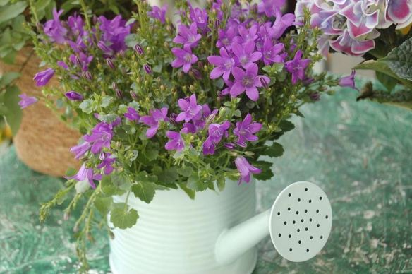 Watering Can with Purple Flowers