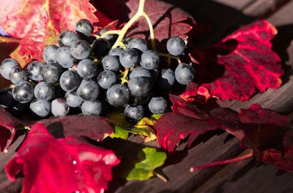 From Vineyard to Table Decor