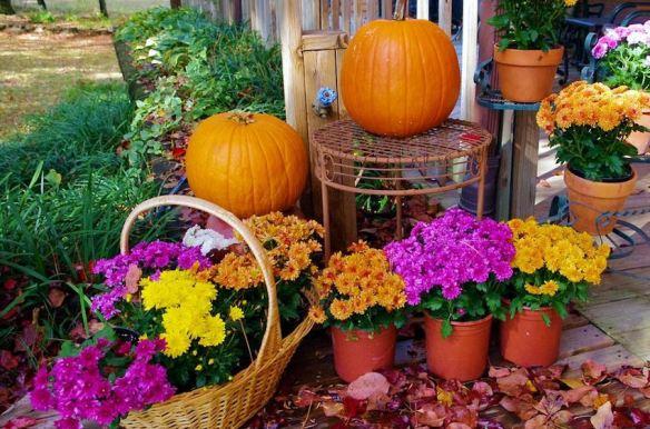 Autumn's Bountiful Harvest