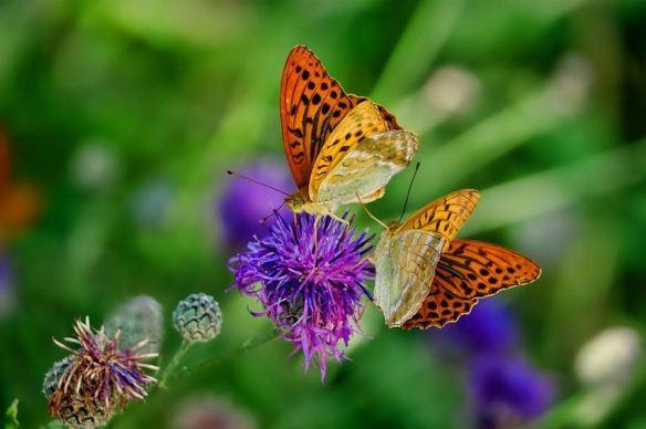 Secondary Colors-Butterflies