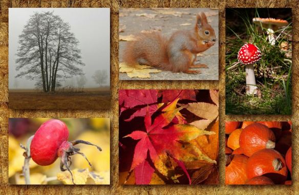 Seasonal Fall Collage