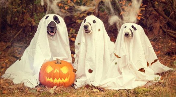 Ghost Dogs