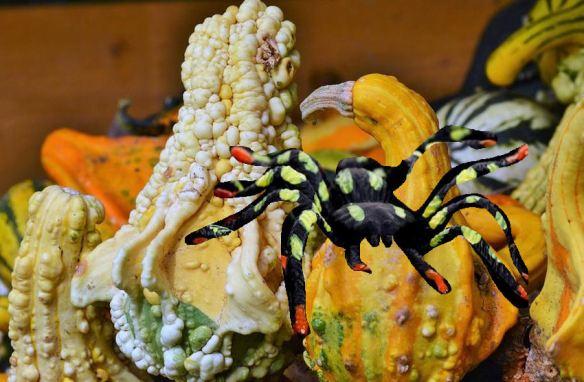 Spider & Gourds