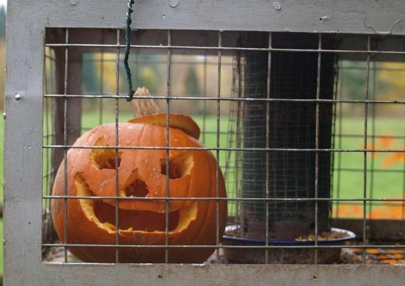 Caged Pumpkin