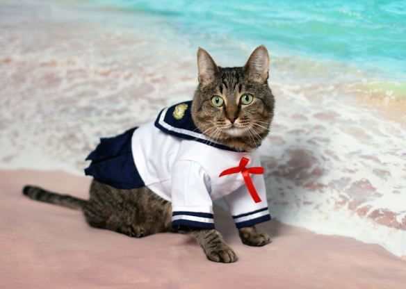 Sailor Cat
