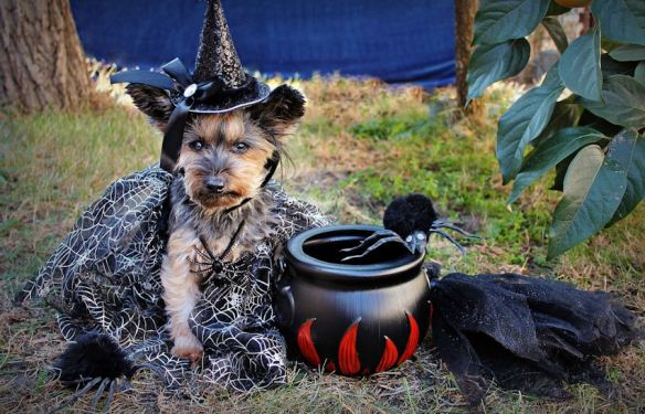 Bewitching Dog