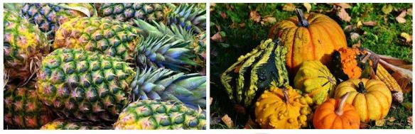 Pineapples Gourds