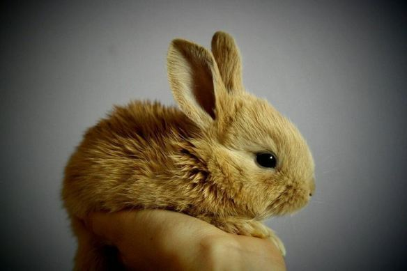 Tan Baby Bunny