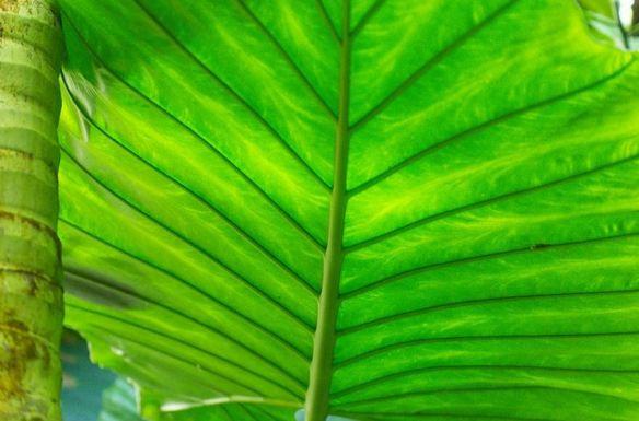 Close-up Tropical Leaf