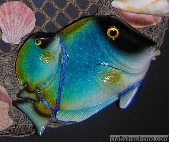 Close Up Fish