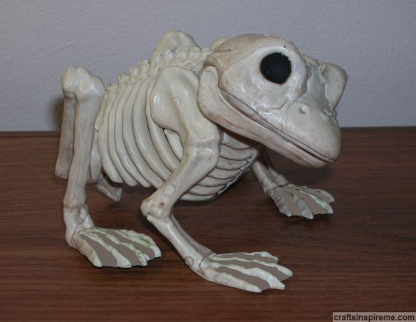 Original Frog Skeleton