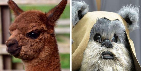 Alpaca & Ewok