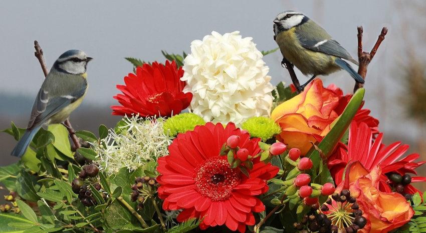 Accessorize Birds & Flowers