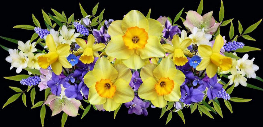 Complements Purple & Yellow