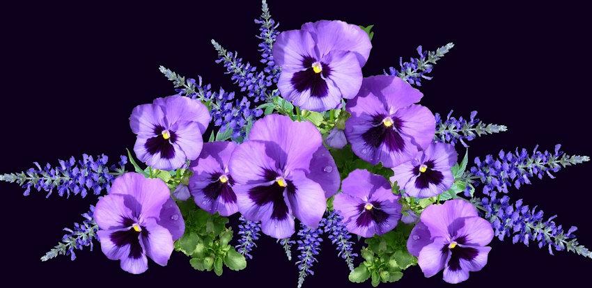 Monochrome Purple