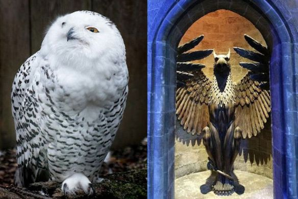 Harry Potter Owl & Griffin